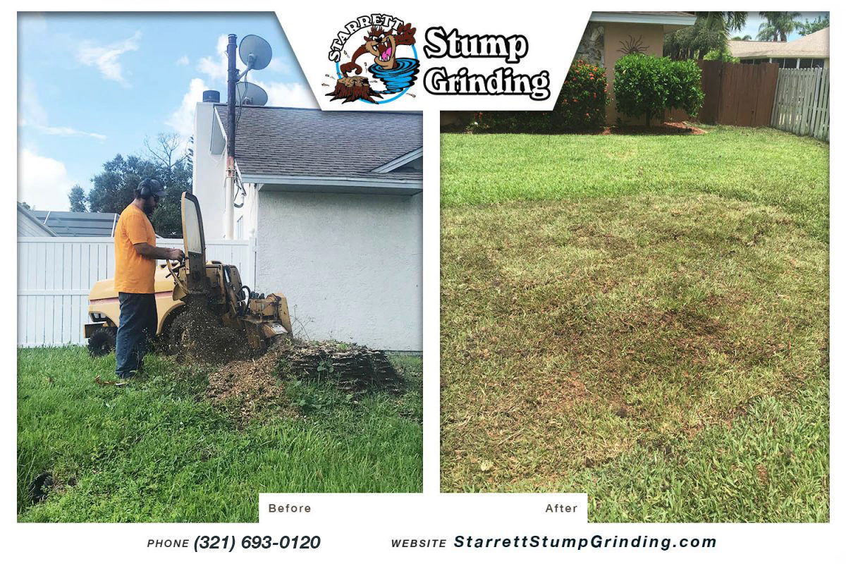 starrett stump grinding indialantic florida stump grinding before after