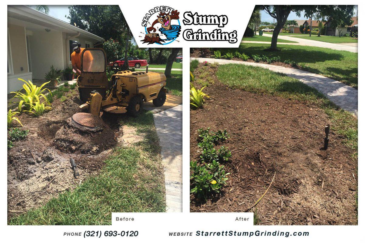 starrett stump grinding indialantic florida stump grinding before after