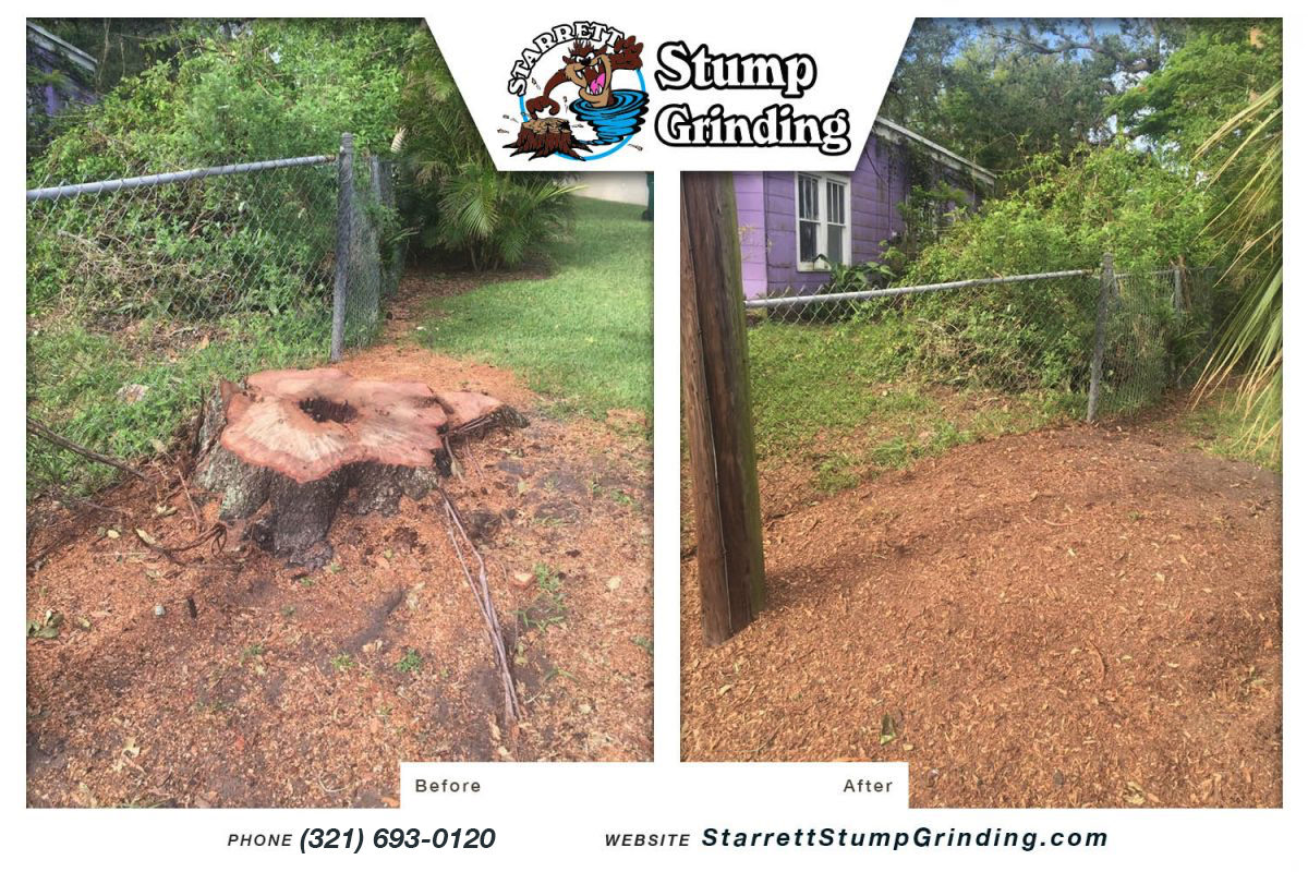 starrett stump grinding indian harbour beach florida stump grinding before after