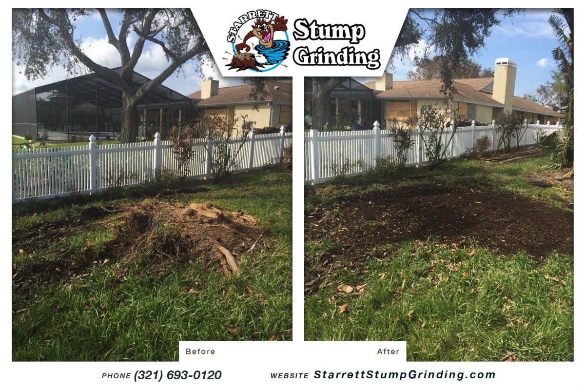starrett stump grinding melbourne florida stump grinding before after