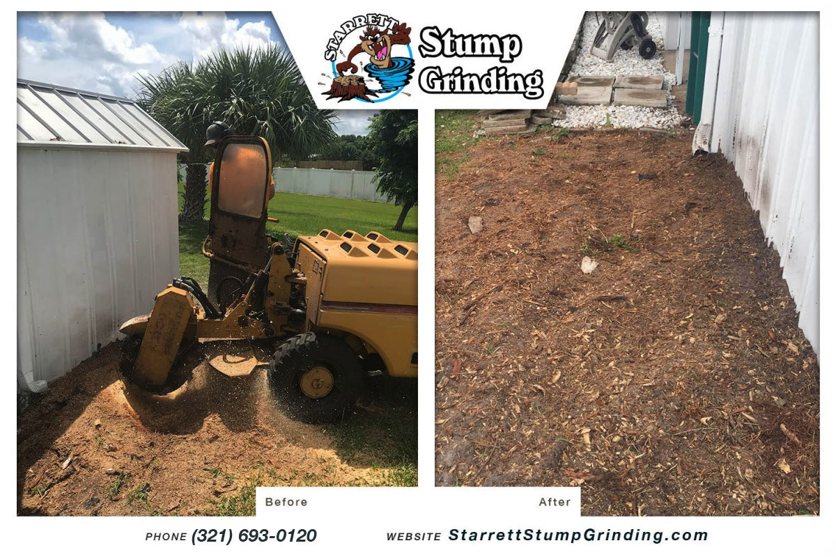 starrett stump grinding palm bay florida stump grinding before after