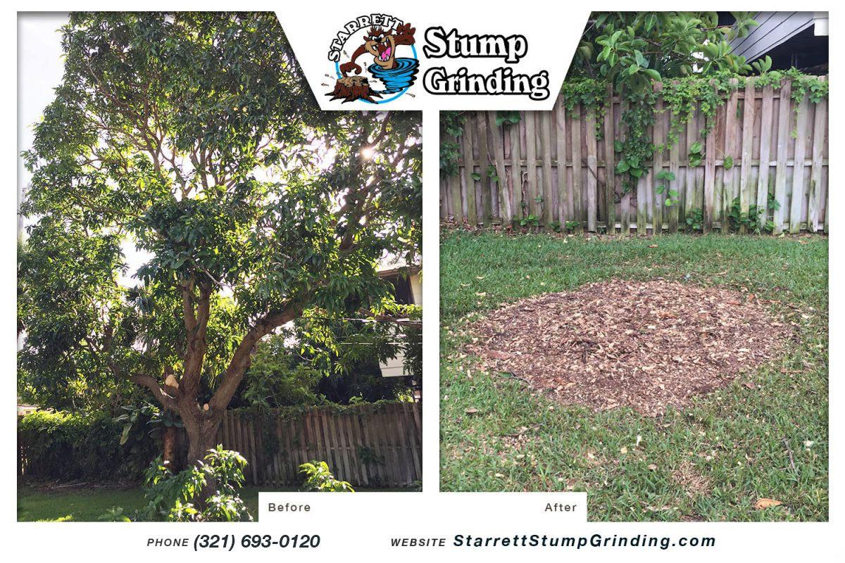 starrett stump grinding palm bay florida stump grinding before after