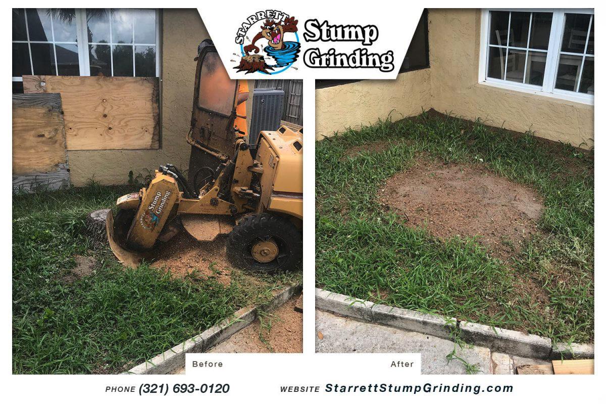 starrett stump grinding satellite beach florida stump grinding before after