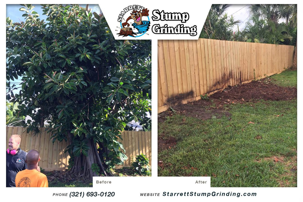 starrett stump grinding satellite beach florida stump grinding before after